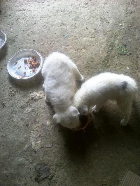 Affamati: i cagnolini si rifocillano