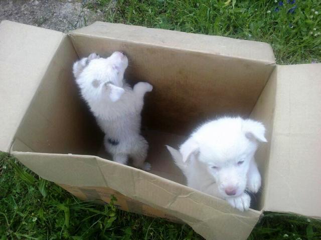 Due dei sei cuccioli trovati