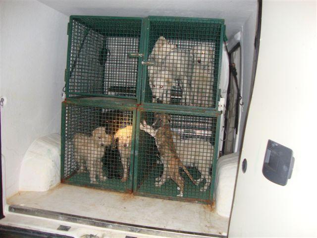 """I cani """"salvati"""" dalla Forestale"""