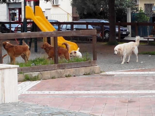 "I ""nuovi padroni"" delle strade montepaonesi"